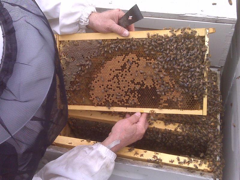 Tending Hive